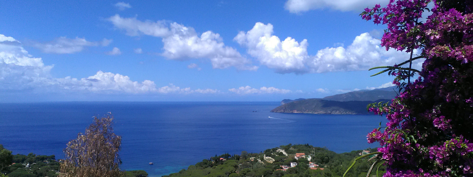 I vini dell'Isola d'Elba
